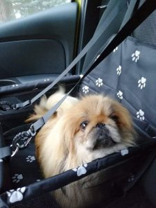 review-dog-seater