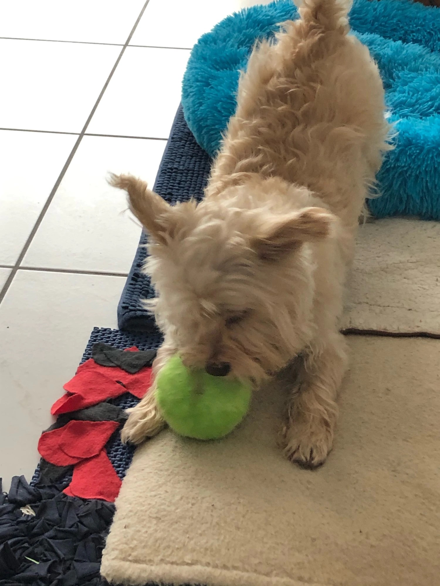 review-magic-dog-toy